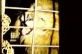 Back door roar (2)