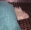 Cold iguana