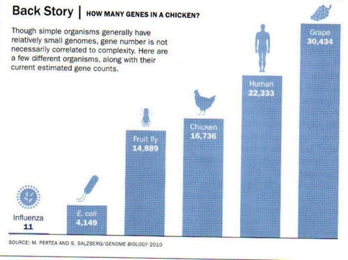 Grape Genes (3)