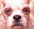 Eyelids stinky (2)